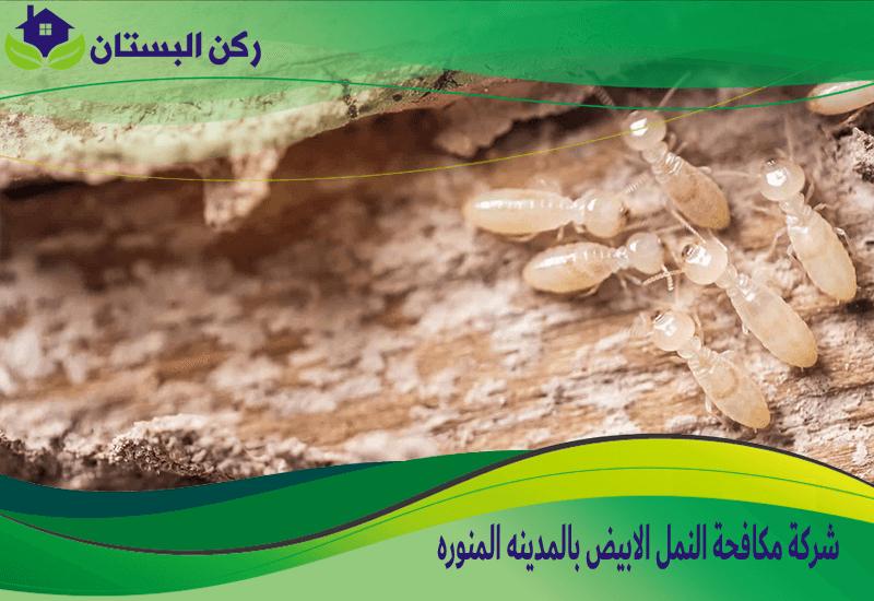 شركة مكافحة النمل الابيض بالمدينه المنوره