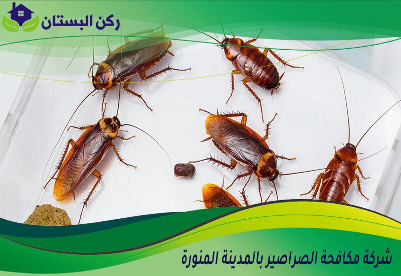 شركة مكافحة الصراصير بالمدينه المنوره
